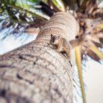 Palmenhörnchen auf Bali